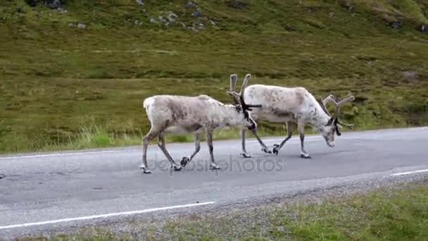 sobí na severu Norska nordkapp