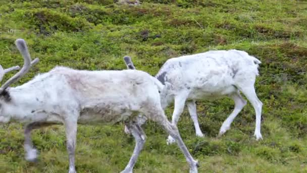 sobí na severu Norska