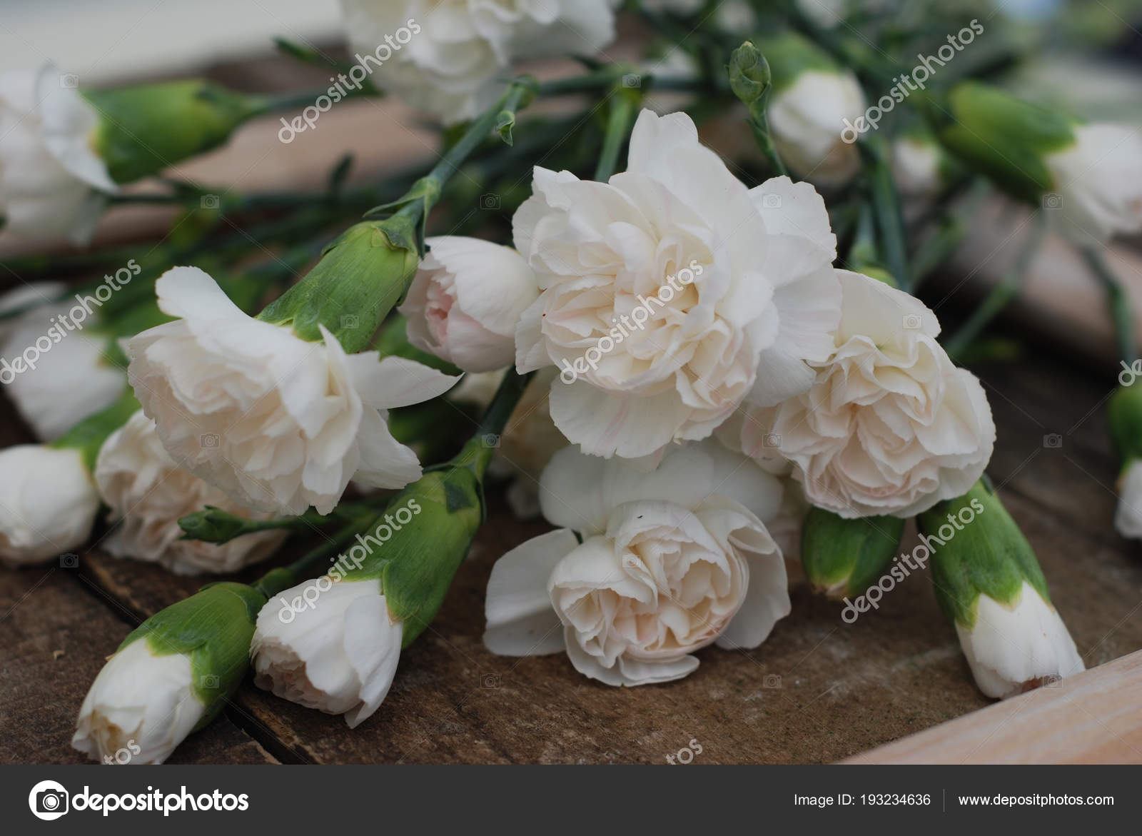 Bunch White Carnation Flower Bouquet Arrangement composition ...