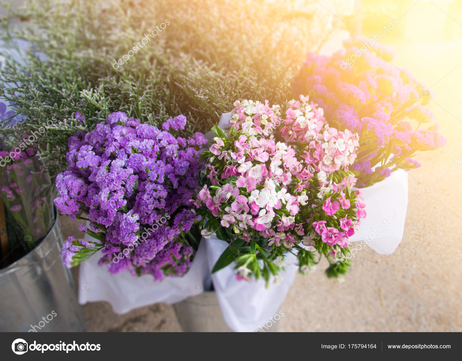 Statice Caspea Flower Stock Photo Torsak 175794164