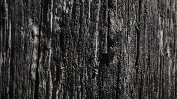 Staré černé dřevěné textury pozadí
