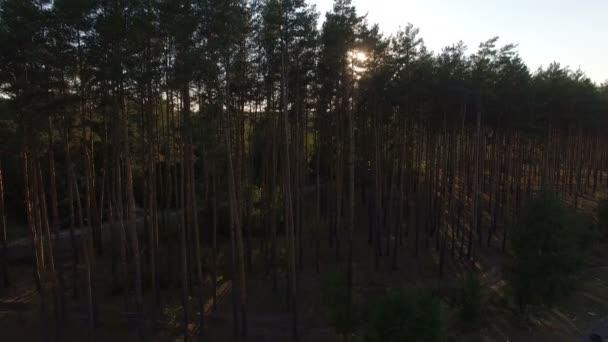 Ekologické krásný borový les. Pohled z antény