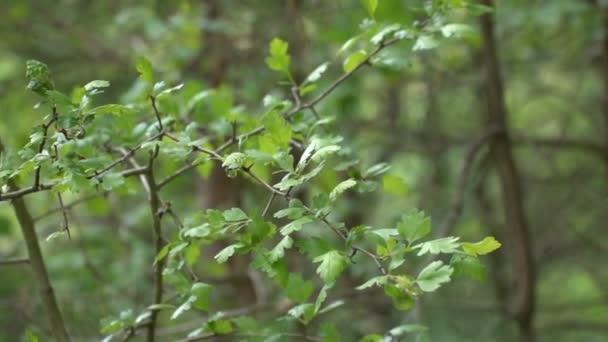 Zelené stromy v parku detail jara
