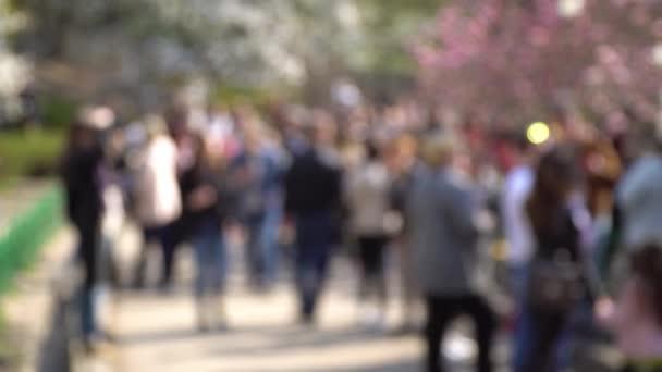 Mutlu insanlar bahar parkında yürüyor. Neşeli bir grup arkadaş dışarıda piknik yapacak. Görüntü hareketi 4k 3840x2160