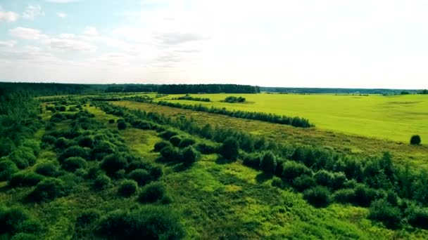 Shooting from the air on the drone. Beautiful fields and trees.