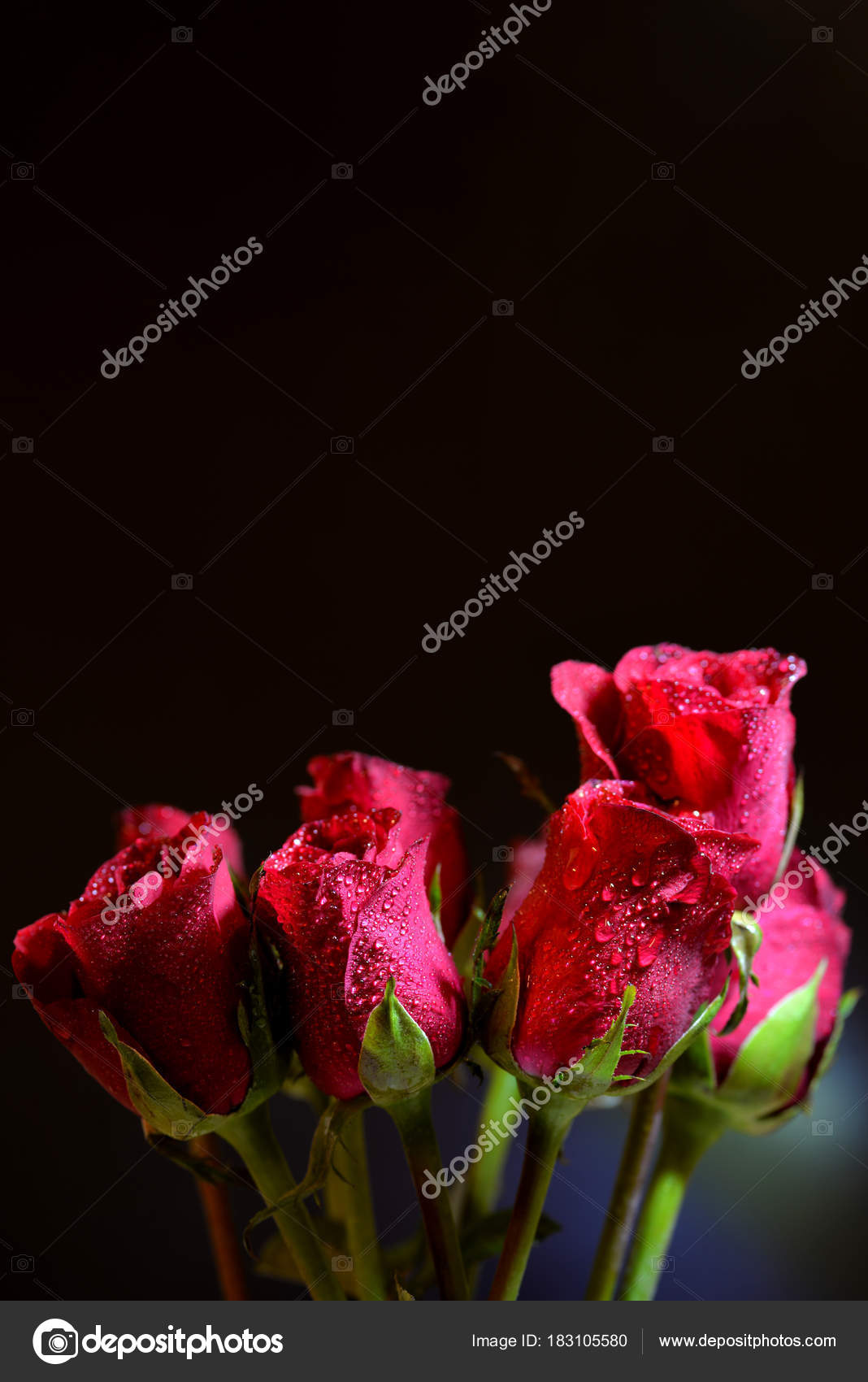 lovely roses bouquet dark background — stock photo © paangpond