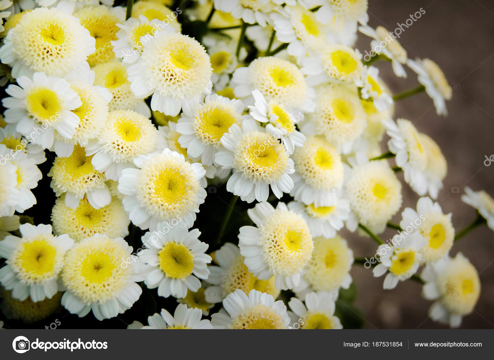 Bouquet Of White Daisies A White Flower With A Yellow Center