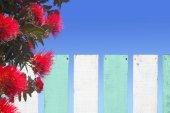 Pohutukawa květiny květy přes dřevěný plot na Novém Zélandu