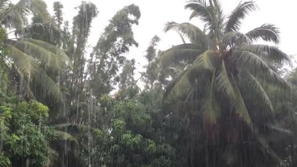 tropischer Regensturm während der nassen tropischen Monsunzeit in rarotonga, Kochinseln
