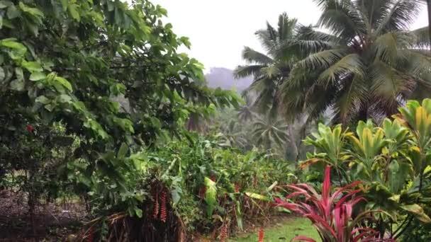 Risultati immagini per pioggia tropicale