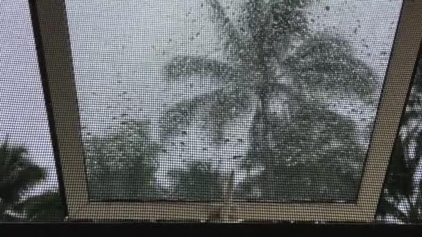 Tropická bouřka jako pohled z domácí okna