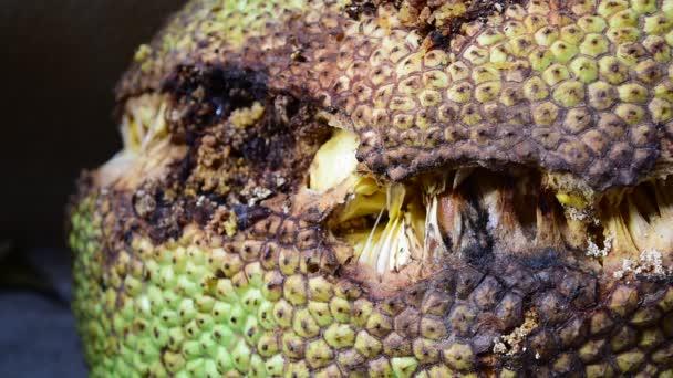 Létající hmyz, který roj Jack ovoce hniloby a tropického ovoce s sladkou chuť
