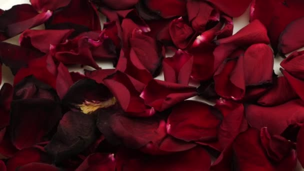 The red rose petals.Decoration for a romantic date.