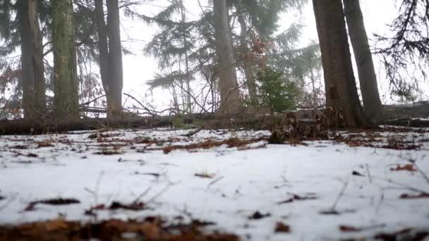 Fotoaparát snímky po zemi jehličnatý les v Pensylvánii v zimě V1