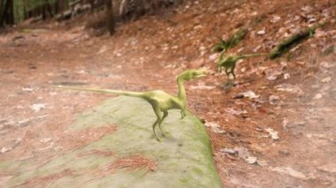 Compsognathus dinosaur pack in a forest in the late Jurassic period