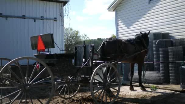 Ein schwarzes Pferd gefesselt an einen hölzernen Zaun in der Nähe einer Amish-Farm - Alt-Winkel
