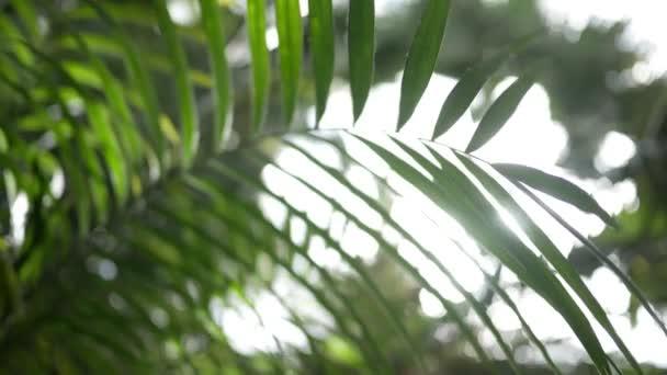 Detailní záběr z džungle kapradí nebo palm frond ve světle