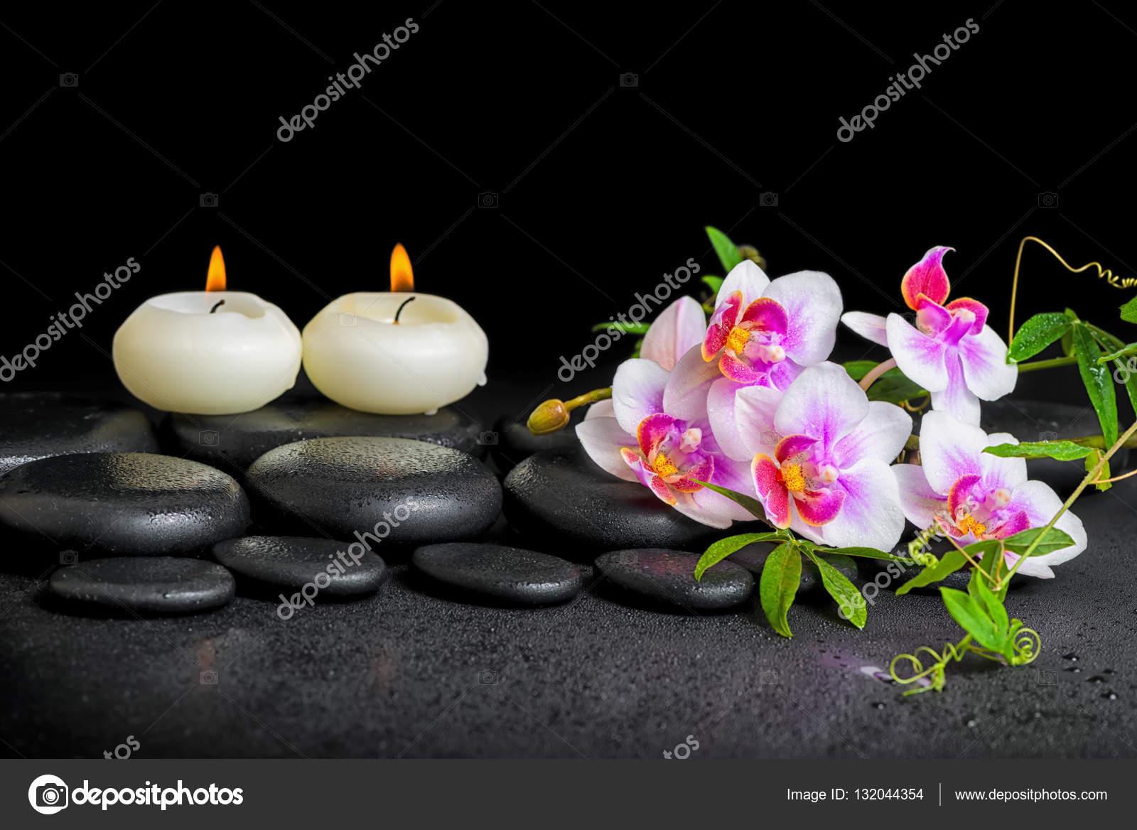 Decoration De Spa à décoration de spa de violet orchidée phalaenopsis, brindille