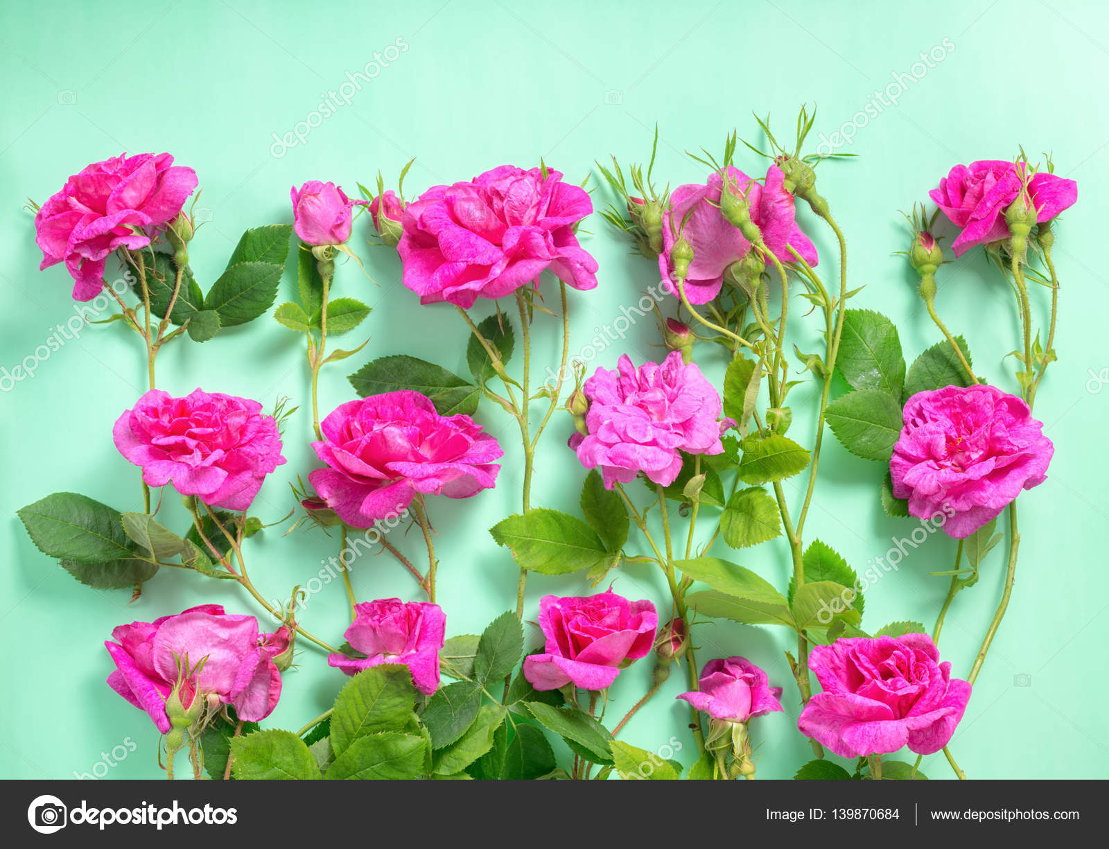 Beautiful romantic pink rose flowers with buds and leaves on gre beautiful romantic pink rose flowers with buds and leaves on gre stock photo izmirmasajfo