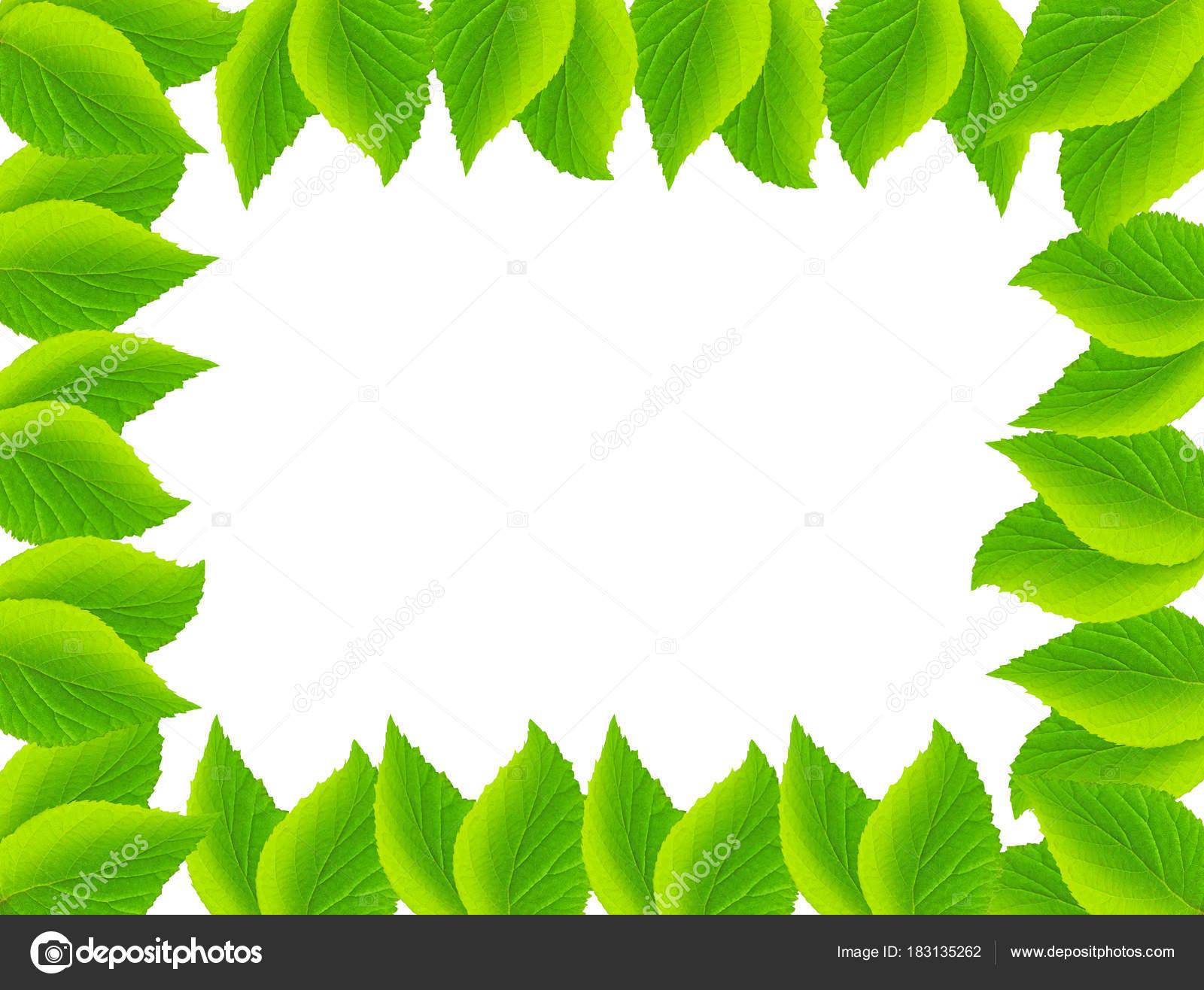 Marco natural de hojas de menta — Foto de stock © IvanHasiuk #183135262