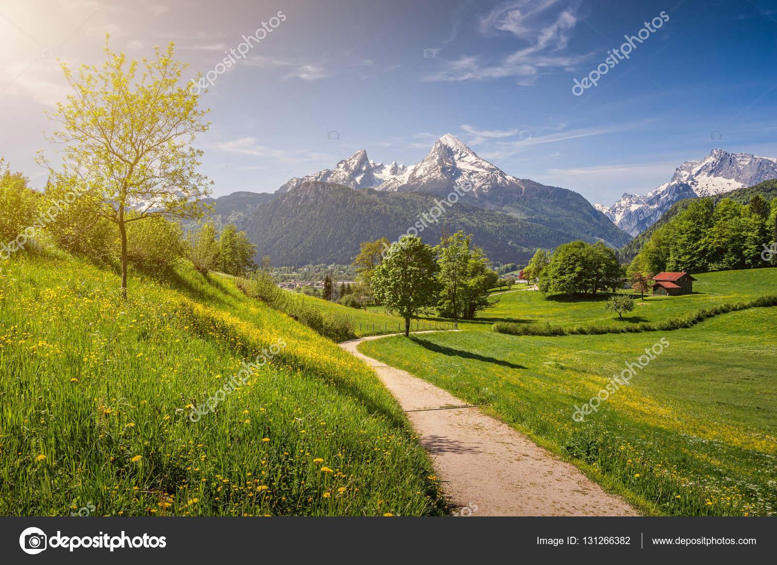 Paesaggio Alpino Idilliaco Con Prati In Fiore E Cime Delle Montagne