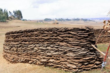 Wall of sundried cow dungs. Oromia-Ethiopia. 0525