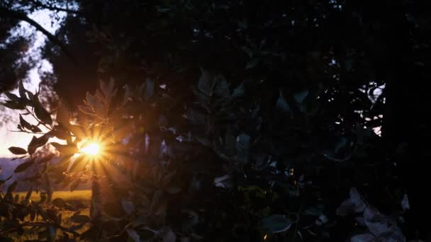 Nature sunny background with shining sun behind branches. Organic background with sun rays and sun rays breaking through orange leaves