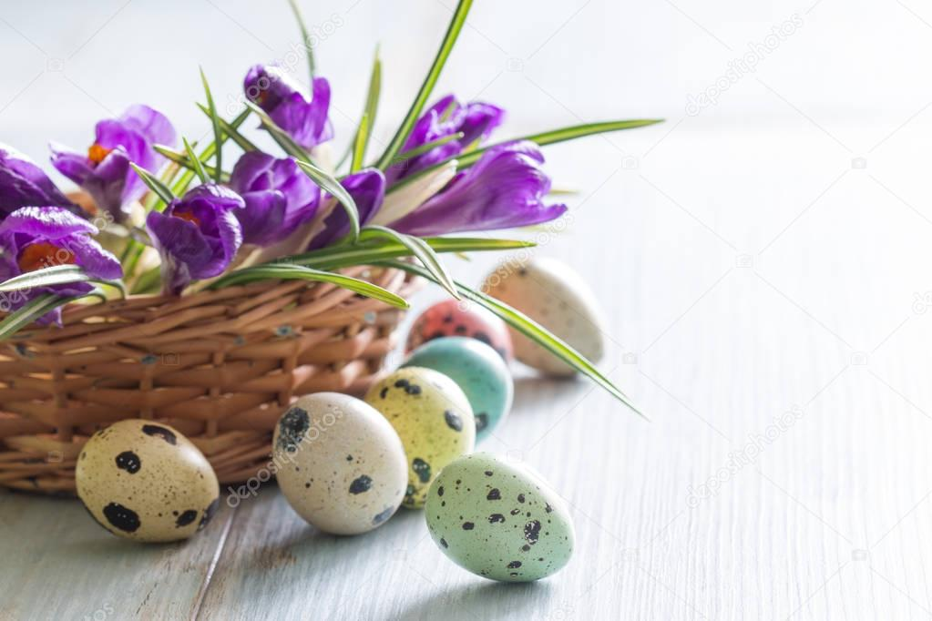 Colorful painted Easter eggs and spring crocus