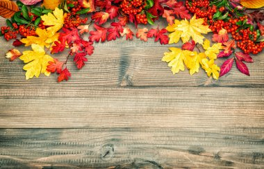 Red yellow leaves berries Autumn background. Vintage style