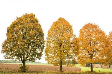 Yellow red autumnal trees. Autumn landscape