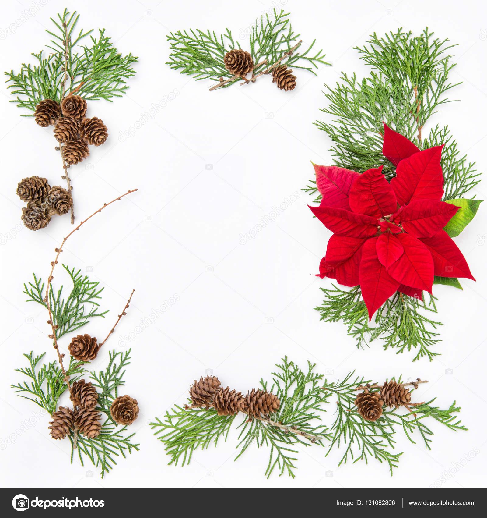 Piso flores pone flor de Pascua flor Navidad de marco ramas de tuya ...