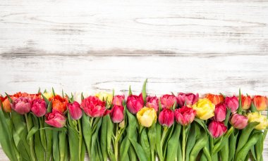 Fresh multicolor tulips Spring flowers wooden background