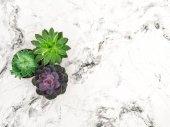 Fotografie saftigen Marmor Hintergrund blumig flach lag