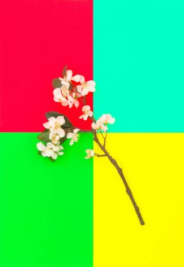 Apple tree blossom colorful background Spring flowers