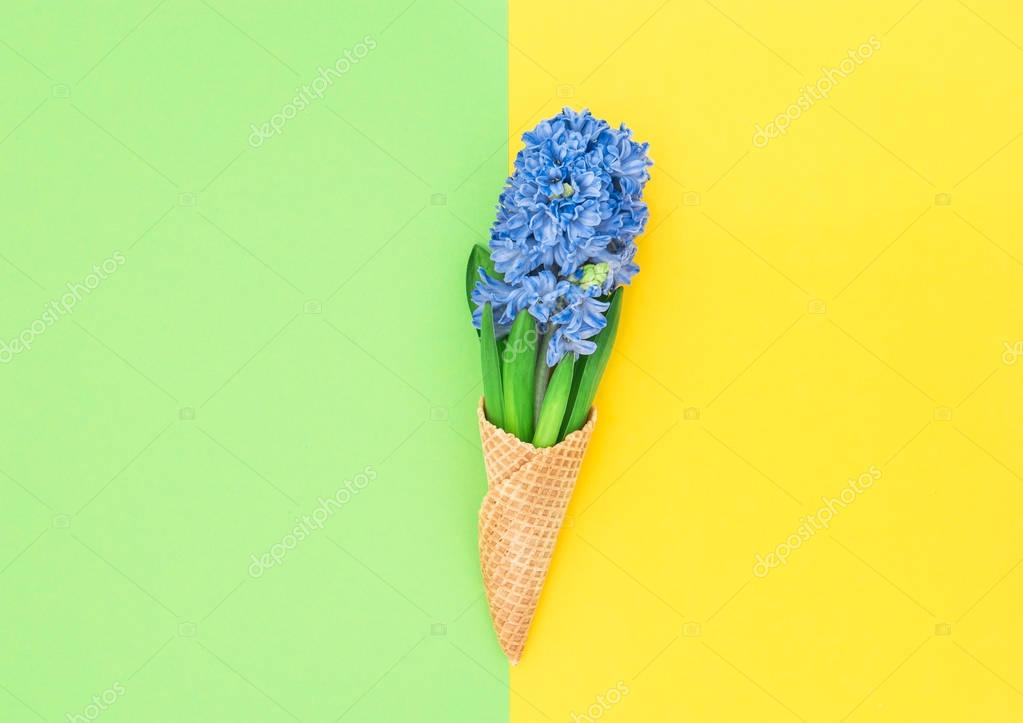 Hyacinth flowers ice cream waffle cone flat lay Spring