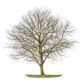 Fotografie Bílé pozadí silueta, samostatný strom