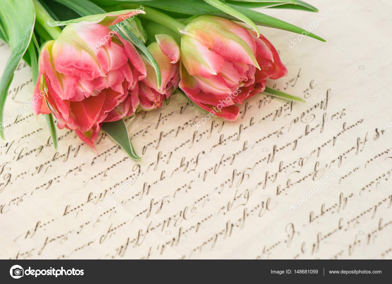 Tulipani Rosa Antico Manoscritto Amore Lettera Fiori Carta Foto