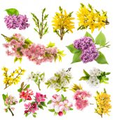 Photo Blossoms apple tree cherry pear forsythia lilac Spring flowers