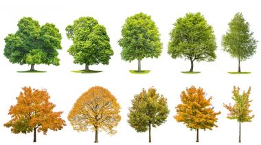 Trees isolated on white background. Oak, maple, linden, birch. Green andyellow leaves stock vector