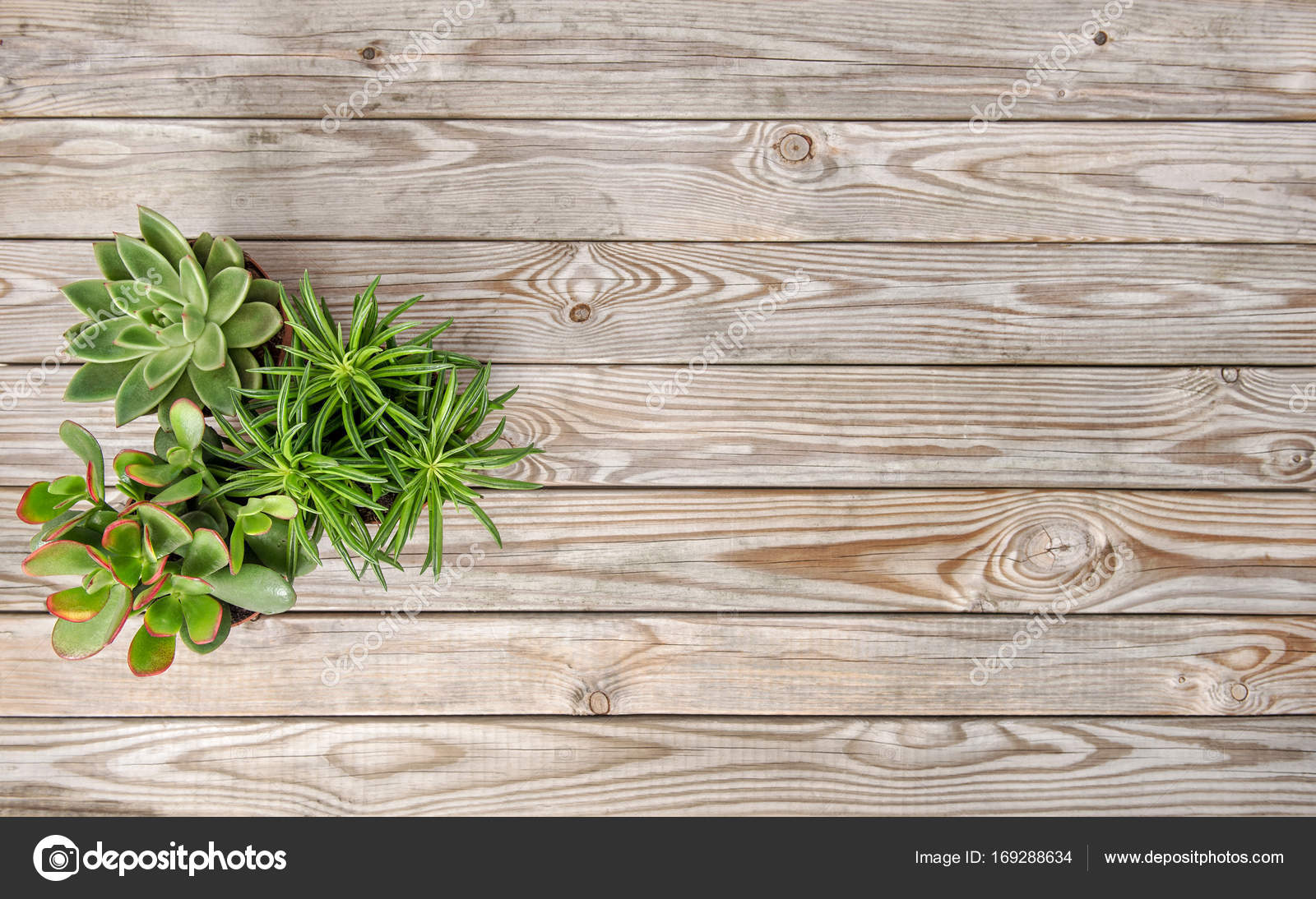 Succulent Plants Vintage Wooden Background Floral Flat Lay Stock Photo Image By C Liligraphie 169288634