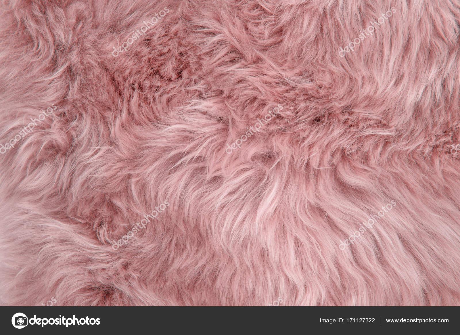Immagini Di Pecora Rosa Pelle Di Pecora Rosa Tappeto Sfondo
