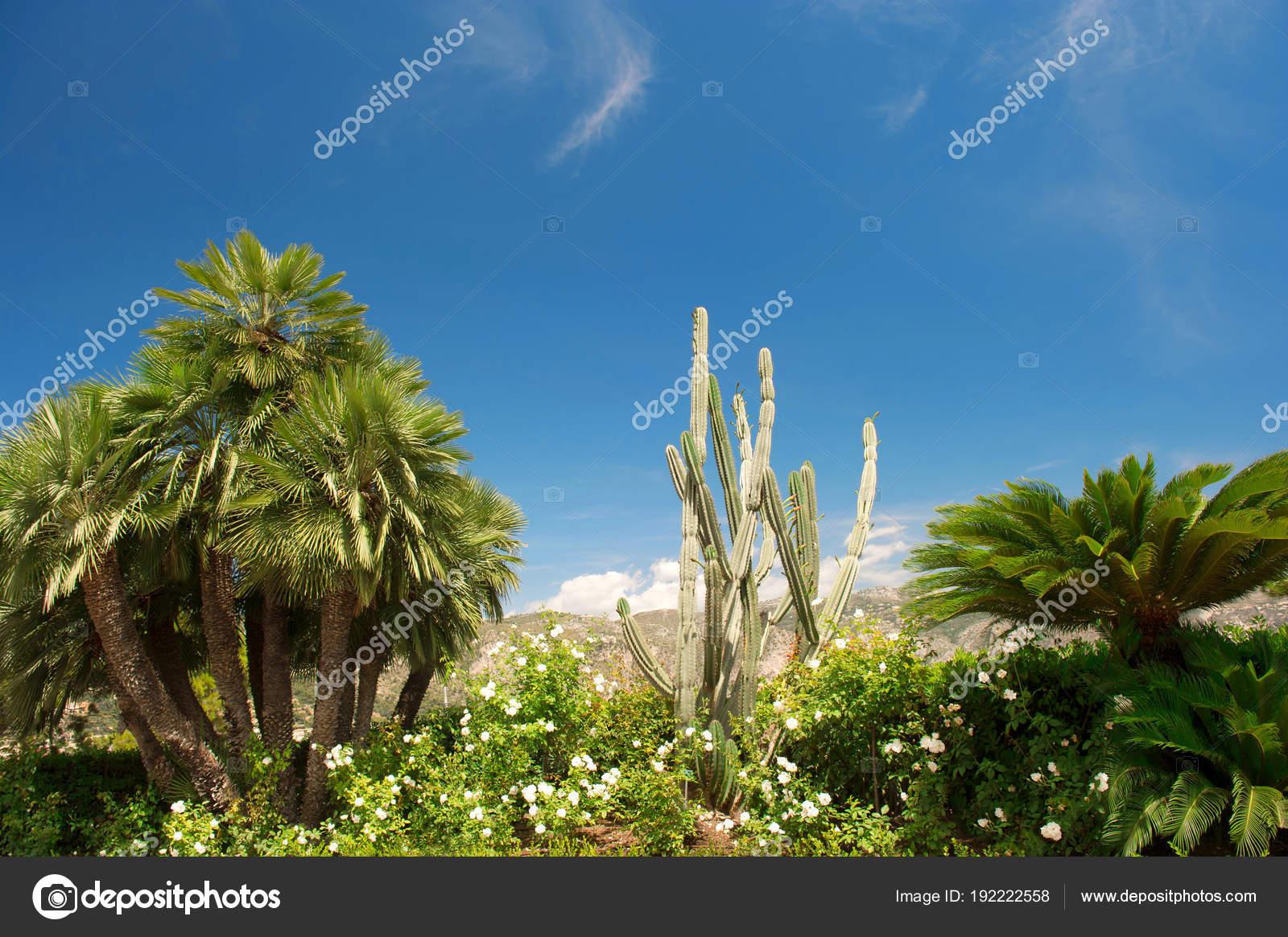 Pianta Del Cactus Di Giardino Mediterraneo Di Palme Alberi