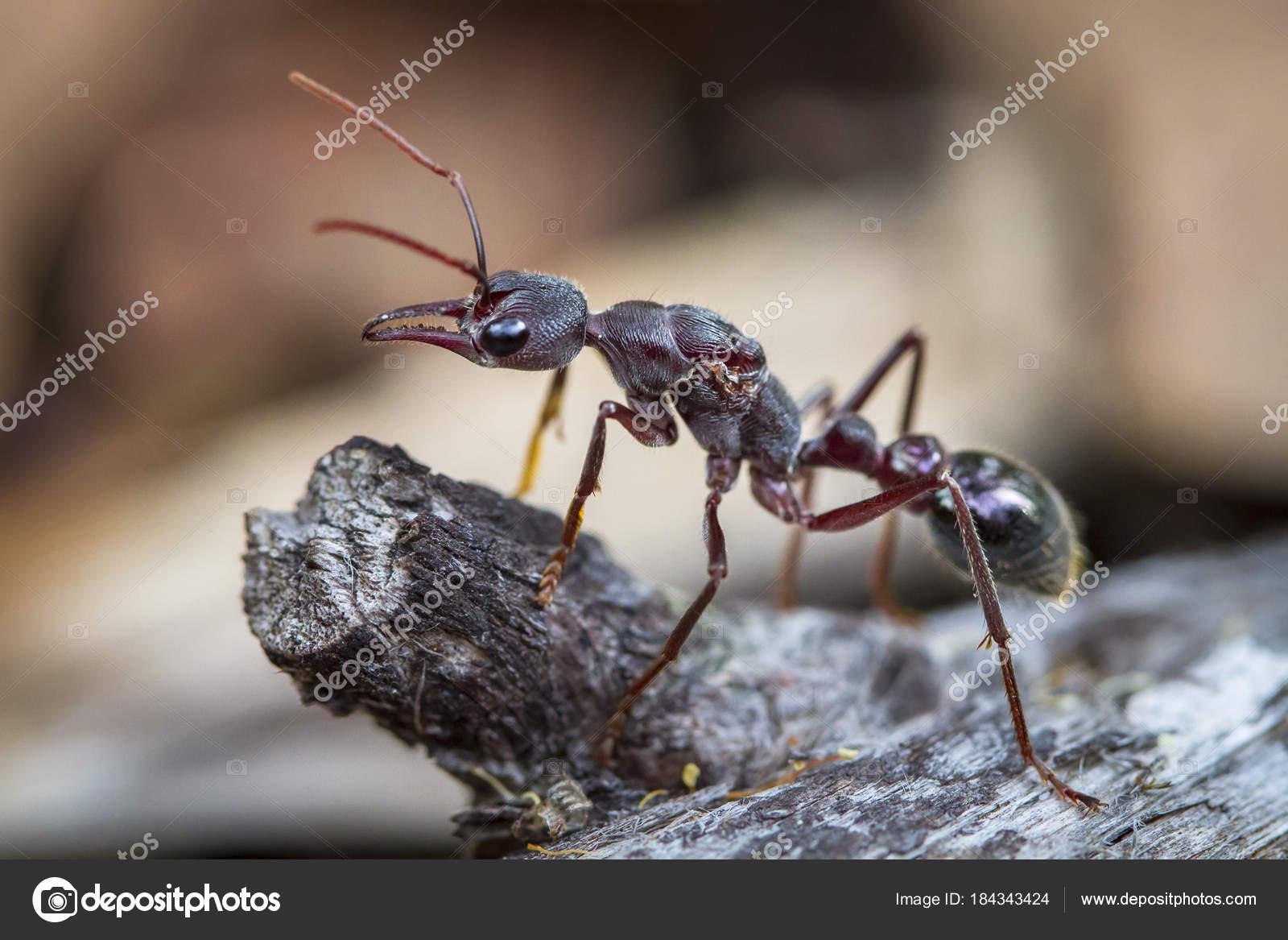 муравей вблизи фото