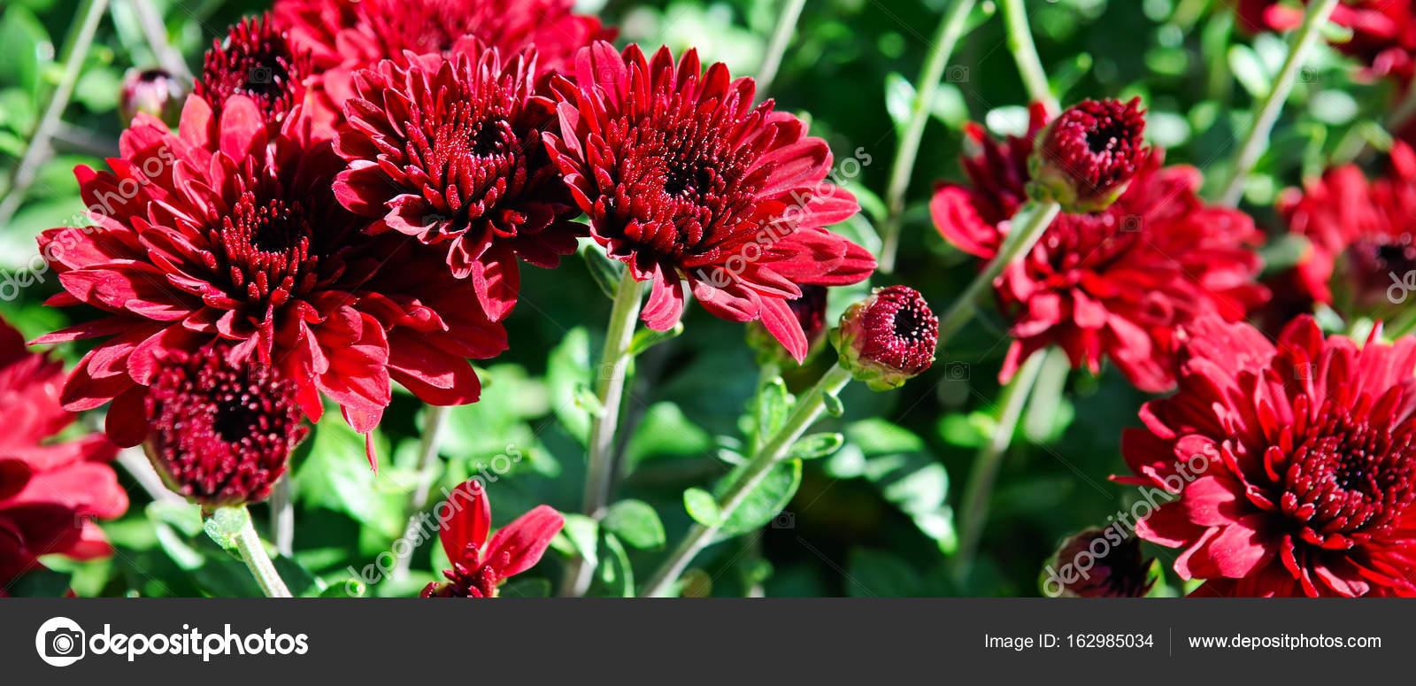 Background of bright garden flowers stock photo alinamd 162985034 background of bright garden flowers stock photo izmirmasajfo