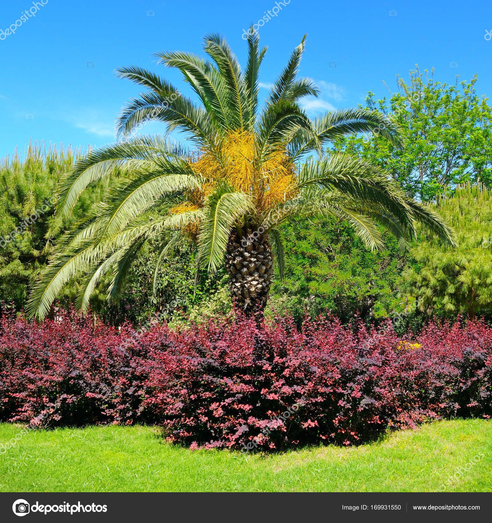 Giardini fioriti immagini good viali piazze e strade del for Piccoli giardini fioriti