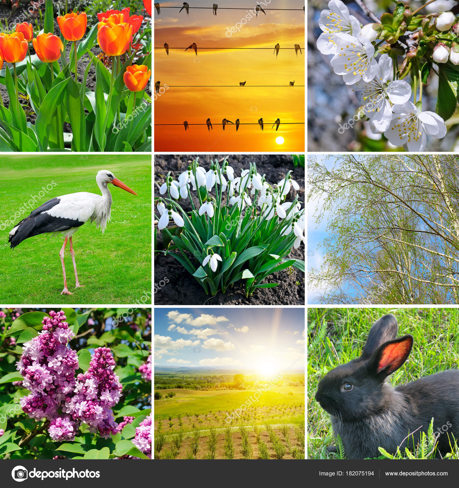 Spring Collage Flowering Flowers Trees And Migratory Birds