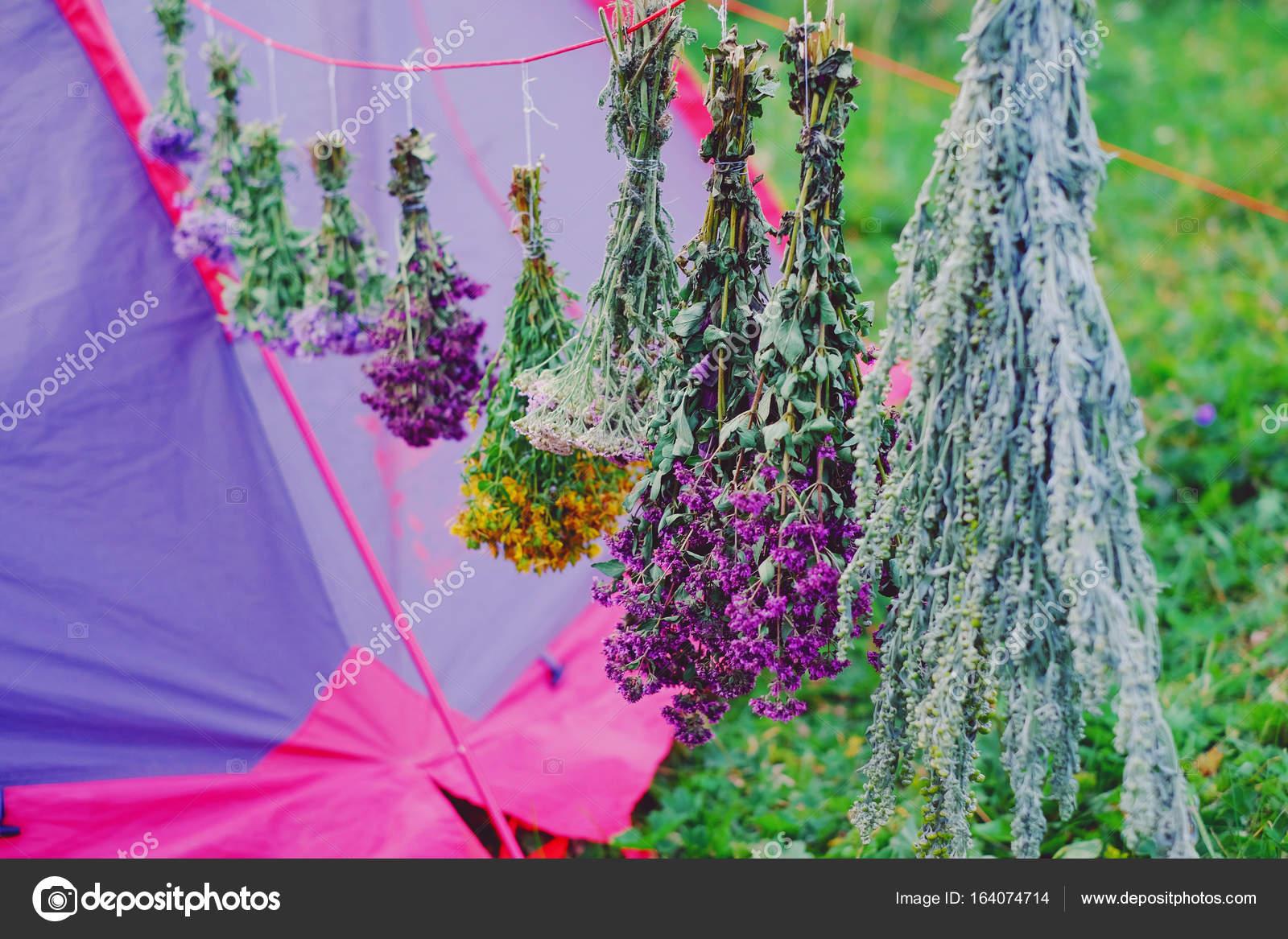 Pflanzen Trocknen therapeutischen pflanzen trocknen stockfoto qzian 164074714