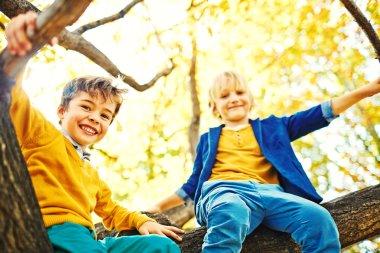Mischievous Boys on Tree