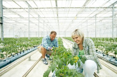 Two farmers sowing in greenhouse