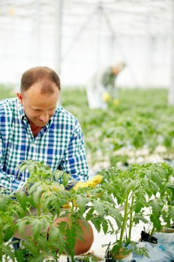 farmer caring for plants in greenhouse